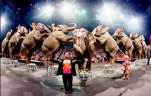 被囚禁的動物活得並不光鮮,因為還要出現在馬戲台上。<br /> <br /> <b...