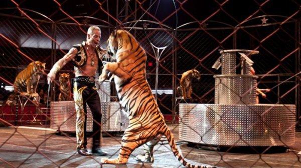 通常情況下,馬戲團的動物經過嚴格的訓練(導致巨大的壓力)或是馴獸師...