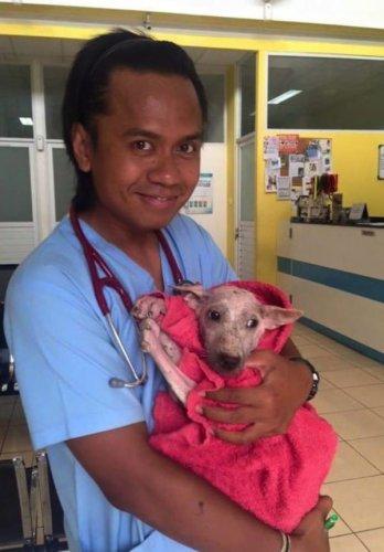 醫療隊日以繼夜地提供凱爾西所需要的照顧和監管。