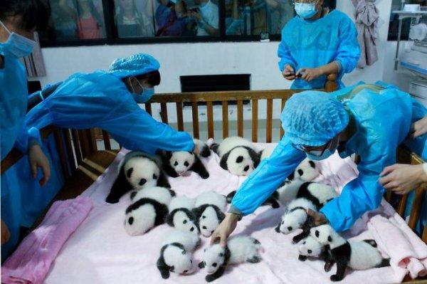 看護人員細心的照顧每個小寶寶
