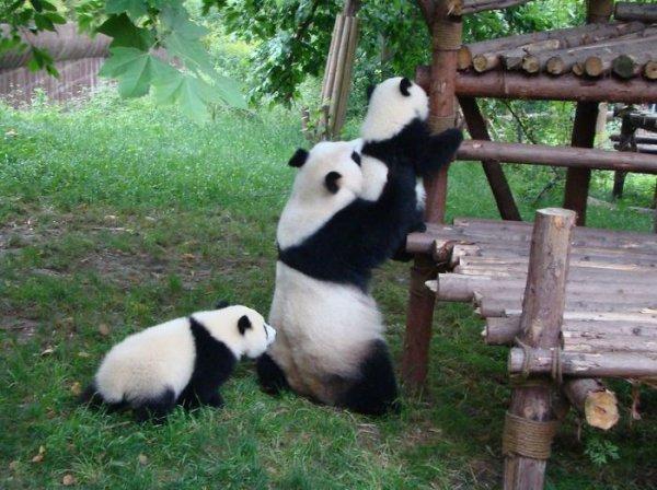 扶穩哦,以後你也會成為「功夫熊貓」
