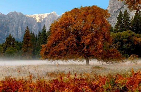 2. 加州約塞米蒂國家公園