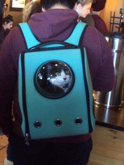 U-Pet新推出了可攜式貓咪寵物包, 這個背包有一個舷窗供喵星人窺探外面的...