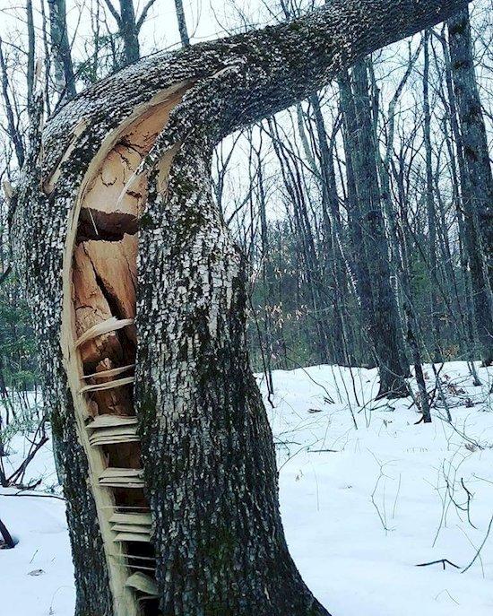 10. 遇到大風暴卻堅決不倒的樹。