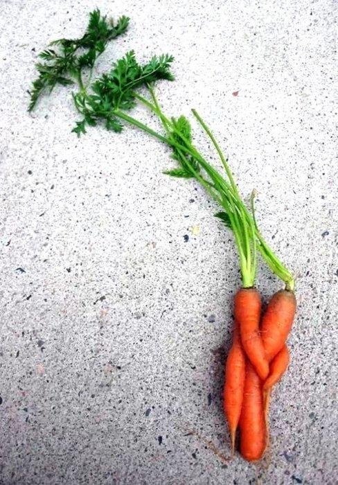 12,蘿蔔的詩情畫意