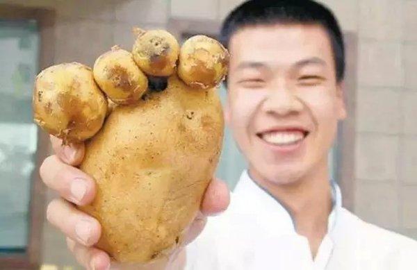 13,熊掌土豆
