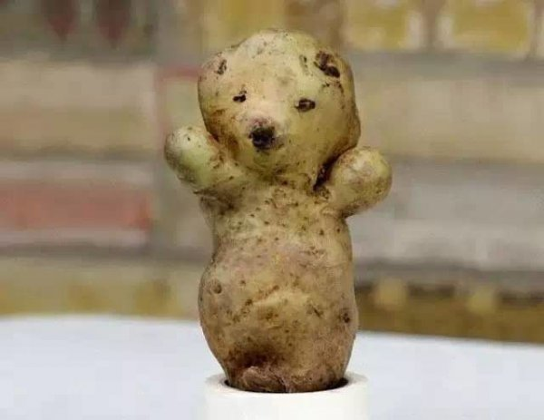 2,小熊土豆