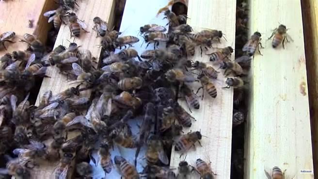 但沒多久時間,一群蜜蜂就齊心協力對抗流星錘蜘蛛,蜘蛛一下子就被數不...
