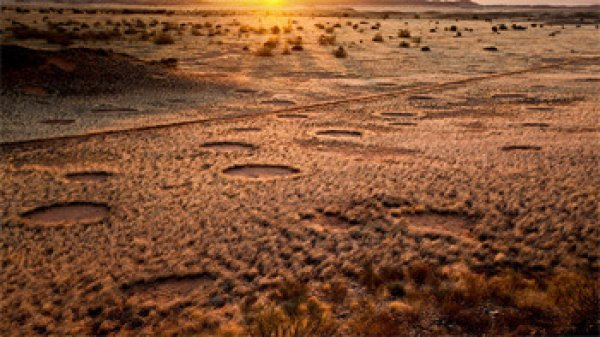 那……這是沙漠青春期嗎?