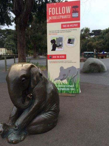 有很多人也趁着这个潮流和大象拍照,<br /> <br /> 并以(不正确的)...