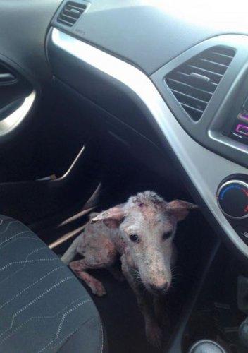 一位好心的陌生人設法把凱爾西帶上了他的車內。<br />