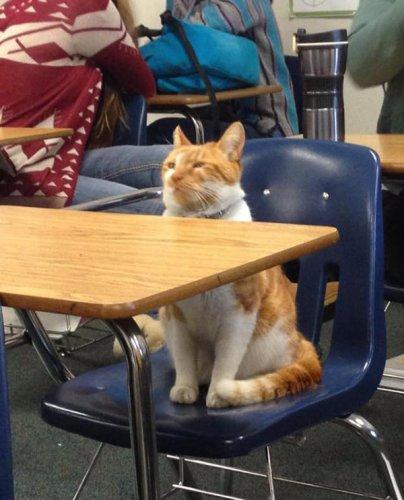 這是布巴,是聖何塞(位於加利福尼亞州)利蘭高中很受歡迎的一隻貓咪,...