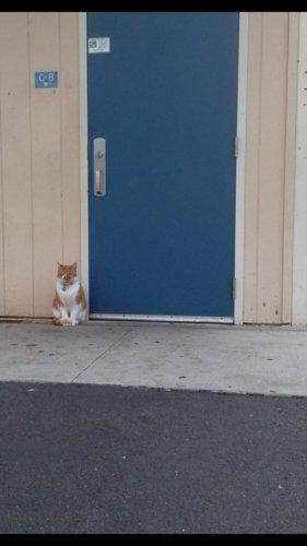 布巴總是第一個抵達校園的。<br /> <br /> 每天早上坐在學校門口,等...