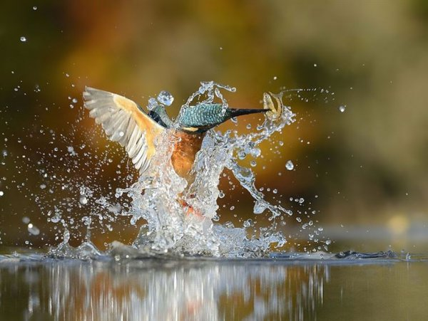 艾倫說,他打算拍一張完美的潛水圖像, 那是完美的筆直潛入並不濺起一...