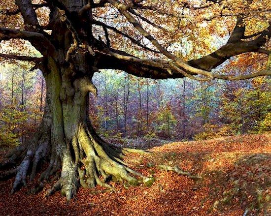 12. 迪恩森林 (英格蘭格洛斯特郡)