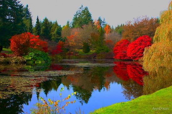 13.  溫哥 華植物園