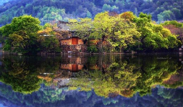 Dream House 위양지의 봄 ...