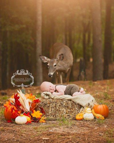 結果事實證明, 「照片炸彈」是瑪姬最喜歡的消遣活動。自從這隻小鹿被...