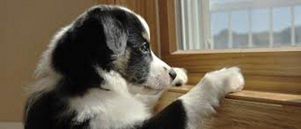 而你首先要做的事就是辨認症狀。因為導致狗狗沮喪的原因非常廣泛, 必...