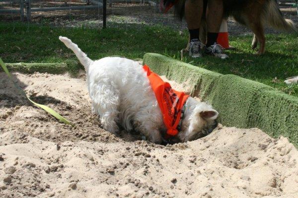 4) 挖掘和破壞