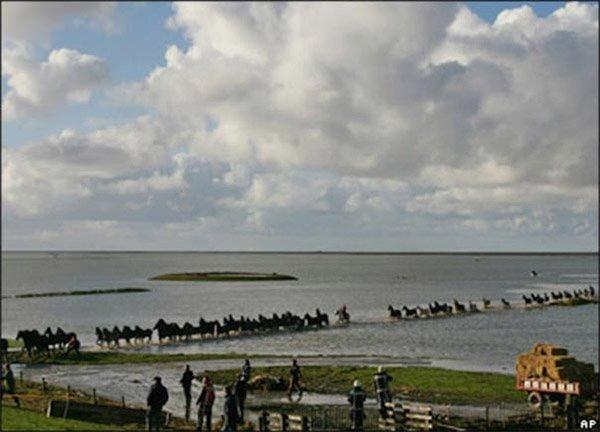 當天騎馬的六個女人被各自的政府表揚她們的英勇行為。她們冒著生命危險...
