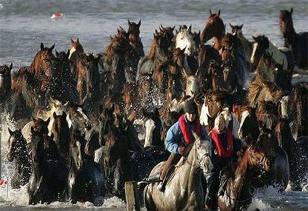 幾位女英雄騎在馬背上帶領馬兒回到650碼以外的安全所在。然而, 只有一...