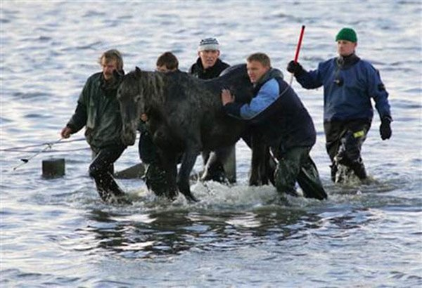 這是最後一匹被獸醫們帶領上岸的馬兒。