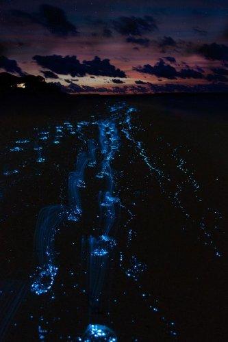 海水裡的藍色發光物源自於會發出生物螢光的浮游藻類,即是 一種會自我...
