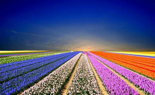 庫肯霍夫有「歐洲花園」之稱, 是其中一座全球最大的花園,那裡種植著...