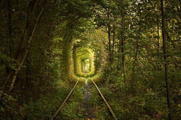 愛的隧道是由樹木和藤蔓一路圍繞克萊文火車軌道而成, 使隧道看起來就...