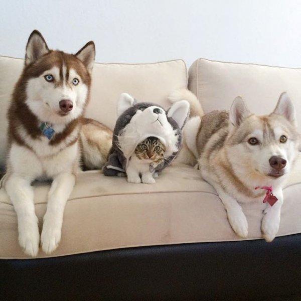 羅西戴上狗狗服飾,還真萌萌噠!