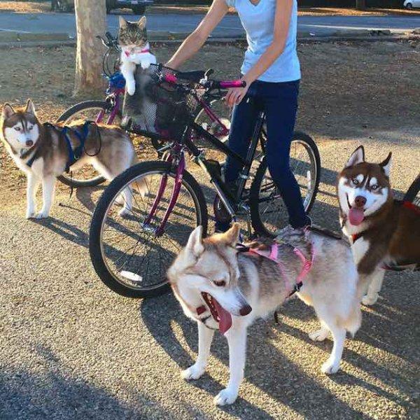 它們的主人真有辦法呢,能夠讓狗狗們跟羅西和睦相處