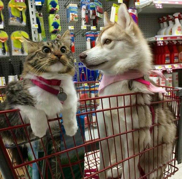 一齊陪主人出去購物