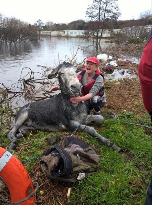 當他們把驢子帶到岸上後, 驢子對救命恩人報以一個最好的感謝方式。