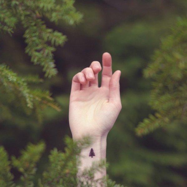 14) 一棵樹勝過一座森林