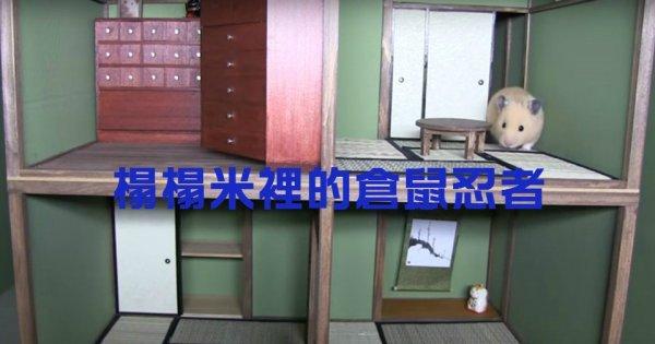 日本一位工匠想為自己的倉鼠動手製作一座豪宅。開始的時候,但有點摸不...