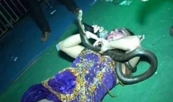 她是印尼女歌手Irma Bule,通常她唱歌的時候習慣帶著蛇一同表演。這次帶上...