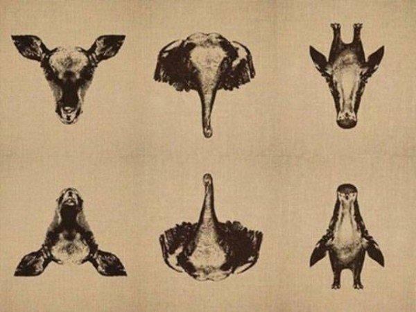 動物倒反的圖