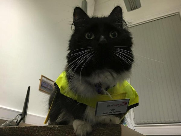 在檢票口旁邊還特別設了一塊貓咪擋板給菲利克斯。