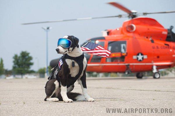 K-9派珀的任務是趕走跑道和滑行道上的野生動物。 這是因為野生動物會威...