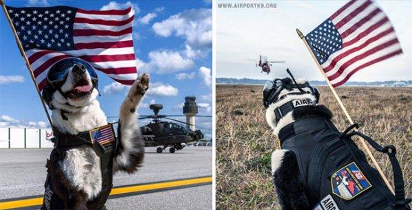 特拉弗斯城美國海岸警衛隊航空站的座右銘是「大湖的守護者」, 這使K-9...