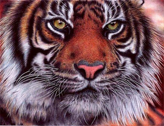 11. 老虎之眼