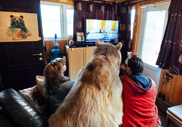 坐在沙發上依偎牠的家人一起觀賞電視節目。