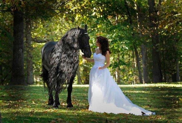 感覺就像是童話故事裡的黑馬。