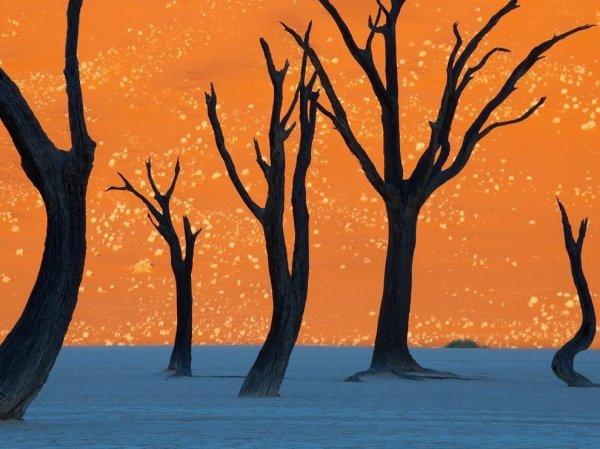 8. 照片中是納米比亞一種名叫「駱駝刺」的樹木, 拍攝時間是在日出時分...