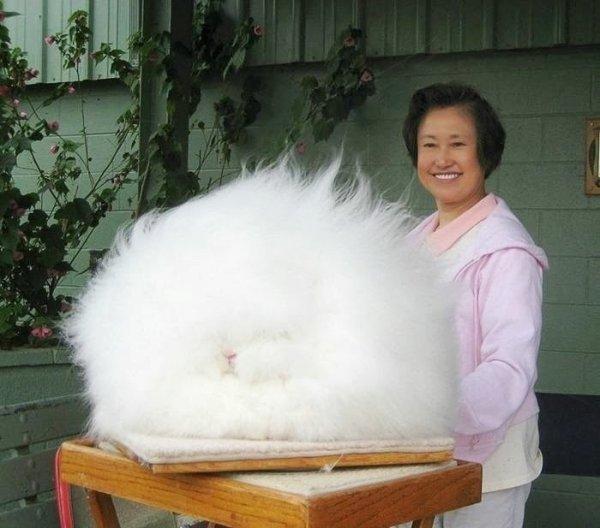 2. 這一團白雲似的東西是一隻蓬鬆、 毛絨絨的兔子!