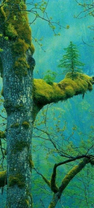 8. 寄生在樹上的小樹