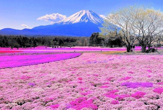 15. 富士山下的春天