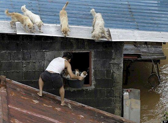 14. 菲律賓山洪暴發時, 這名男子勇救四隻小狗。