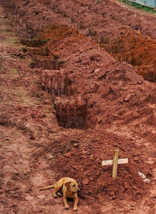 3. 名叫萊奧的狗兒坐在已故主人的墳墓邊, 其主人死於里約熱內盧附近的...